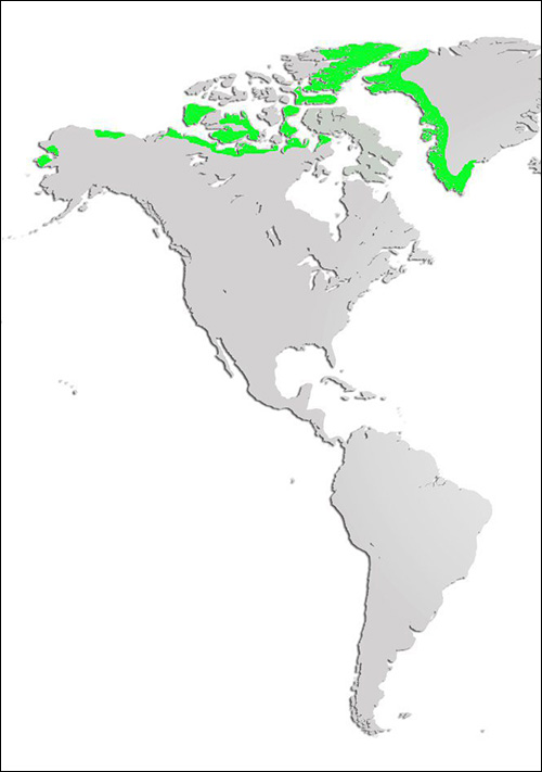 Arctic Wolf Map