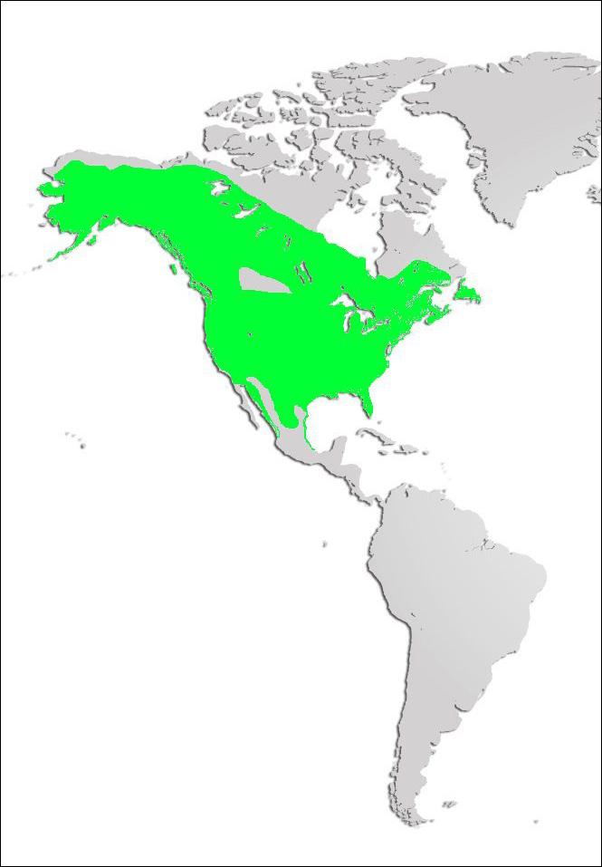 Bald Eagle Map
