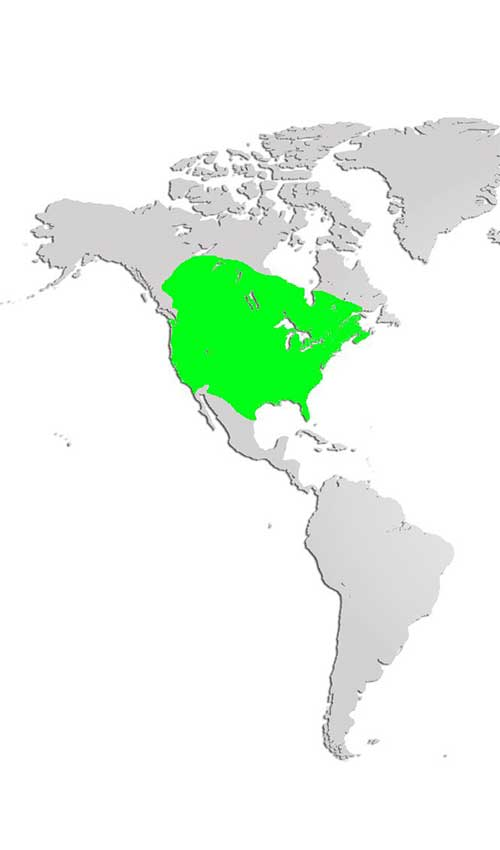 Striped Skunk Map
